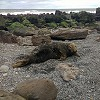 North Yorkshire Coast Wildlife - The Seal Colony at Ravenscar